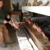 Agriturismo i Dorgali och Cala Gonone – hela listan