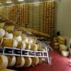 Hjälp jordbävningsdrabbade mejerier i Italien